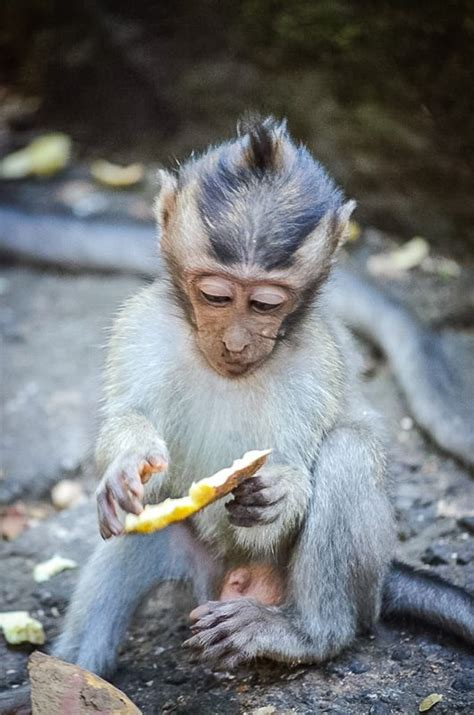 Read this BEFORE Visiting The Ubud Monkey Forest Bali