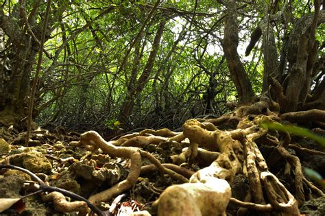 West Bali National Park - National Park in Bali - Thousand