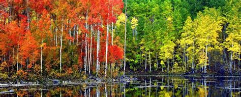 Human Activity Is Killing One of The Largest Organisms on