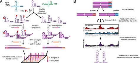 Multiplexed RNA structure characterization with selective