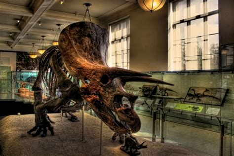 What Happened To The Dinosaurs?   Here & Now